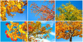 Autumn tree on blue sky. set — Stock Photo