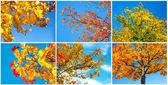 Autumn tree on blue sky. set — Stock Photo