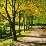 güzel sonbahar tre ile dizilmiş egzersiz için yaya geçidi — Stok fotoğraf