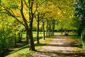 Pedestrian walkway for exercise lined up with beautiful fall tre — Stok fotoğraf
