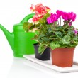 Plant in flowerpot  and green watering can, isolated on white — Stock Photo