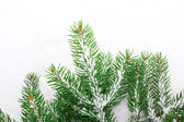 Christmas tree with snow, isolated on white background — Stock Photo