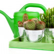 Succulent cactus in a metal bucket, on white background — Stock Photo