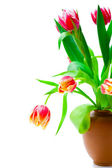 Beautiful red tulips in a vase on a white background (with sampl — Stockfoto
