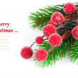 Christmas red berries with copy space, on on white background — Stock Photo