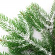 Branch of Christmas tree on white background — ストック写真