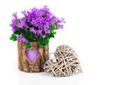 Blue campanula flowers for Valentine's Day with wooden heart, on — Stok fotoğraf