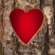 Foto Stock: Heart cut in hollow tree trunk