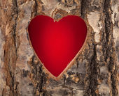 Heart cut in hollow tree trunk — Stock Photo