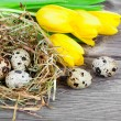 Quail eggs with tulips on wooden background — Stock Photo