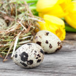 Quail eggs with tulips on wooden background — Stock Photo #41038635