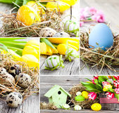 Setof Easter eggs on wooden background — Stock Photo