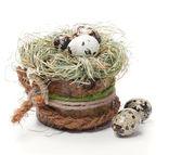 Quail egg in nest isolated on white background — Stock Photo