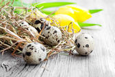 Uova di quaglia su fondo in legno — Foto Stock
