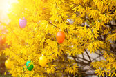 Easter eggs  hanging on bush in spring — Stock Photo