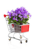 Blue campanula flowers in a Shopping cart, on white background — Stock Photo