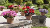 Geranium and flower garden built on terrace  — Stock Photo
