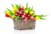 Spring tulips in wooden basket, on white background. happy mothe — Stock Photo