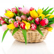 Spring tulips in wooden basket, on white background. happy mothe — Stock Photo #44538301