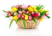 Spring tulips in wooden basket, on white background. happy mothe — Fotografia Stock