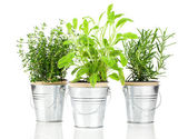 Sage, thyme and rosemary herb plant growing in a distressed pewt — Stock Photo