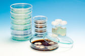Petri dish with colonies of microorganisms — Stockfoto