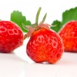 Strawberries isolated over white background — Stock Photo #48420587
