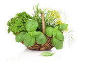 Cestino di vimini con erbe aromatiche fresche - basilico, aneto, prezzemolo, rosmarino. — Foto Stock