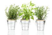 Sauge, le thym et le romarin plante herbacée qui pousse dans une pewt détresse — Photo