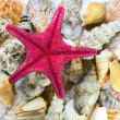 Seashell collection — Stock Photo