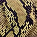 Snake skin background — Stock Photo #20106127