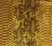 Snake skin background — Stock Photo