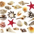 Seashell collection isolated on white background — Stock Photo