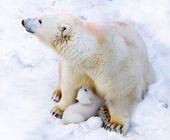 Polar bear with cub on snow — Stock Photo