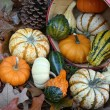 Pumpkins And Gourds — Stock Photo #19347751