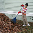 Stock Photo: Raking Leaves