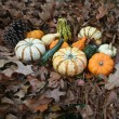 Pumpkins And Gourds — Stock Photo #19348935