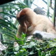 Singapore Zoo — Stock Photo