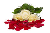 Italian Roses. Red, White and Green. Isolated on White — Stock Photo