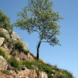 Small tree growing on rocks — Stock Photo