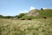 风景与母牛 — 图库照片