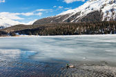 Lake covered with ice — Stock Photo