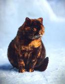 Kat in de sneeuw — Stockfoto