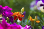 Beautiful colorful floral background with a bee — Stock Photo