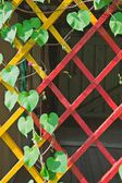 Bindweed on multicolored wooden lattice — Stock Photo