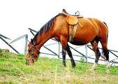 Horse in a farm — Stock Photo