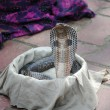 Cobra snake in a basket, New Delhi, India — Stock Photo #45977611