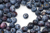 Standout Blueberry — Stock Photo