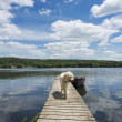 Dog on the Cottage Dock — Stockfoto