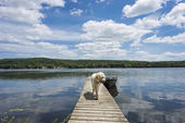 Dog on the Cottage Dock — Stock Photo